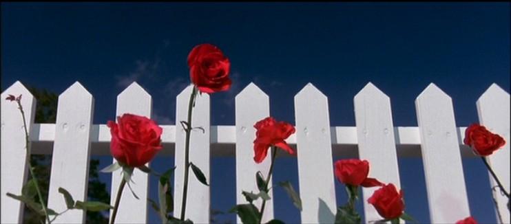 http://wondersinthedark.files.wordpress.com/2009/10/blue-belvet-1.jpg