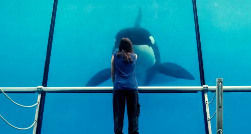 rust-and-bone-orca-killer-whale-cotillard