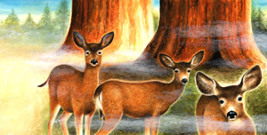 Sequoia deer art