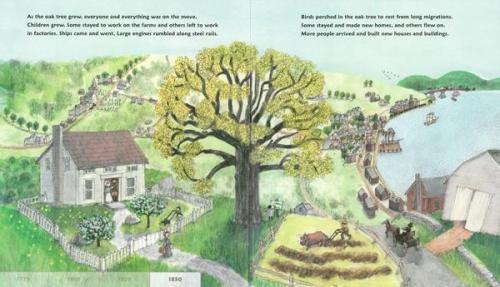 as an oak 2
