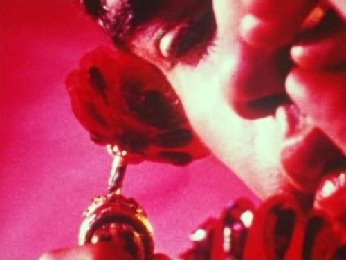 Pink narcissus 1971 wonders in the dark pn01 mightylinksfo